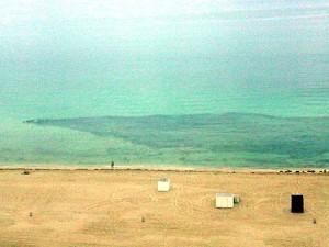 The Great Sardine Migration - Miami Beach