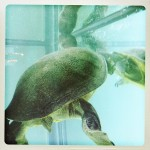 03_turtle_ball_2013